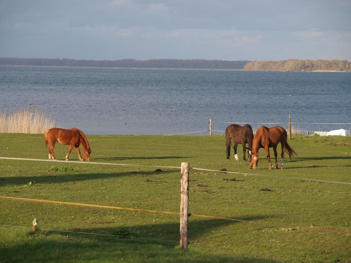 Pferde und See
